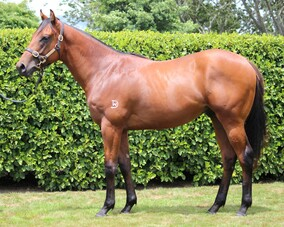 Lot 112 - Rothesay ex Cinnamon Dove